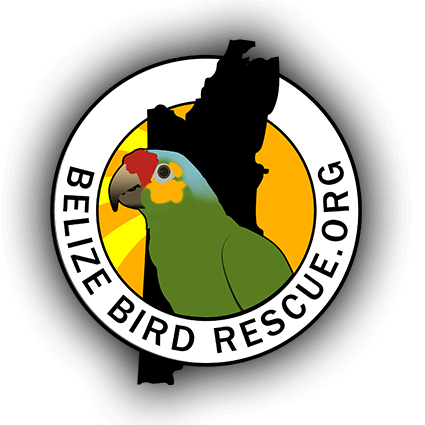 Belize Bird Rescue logo